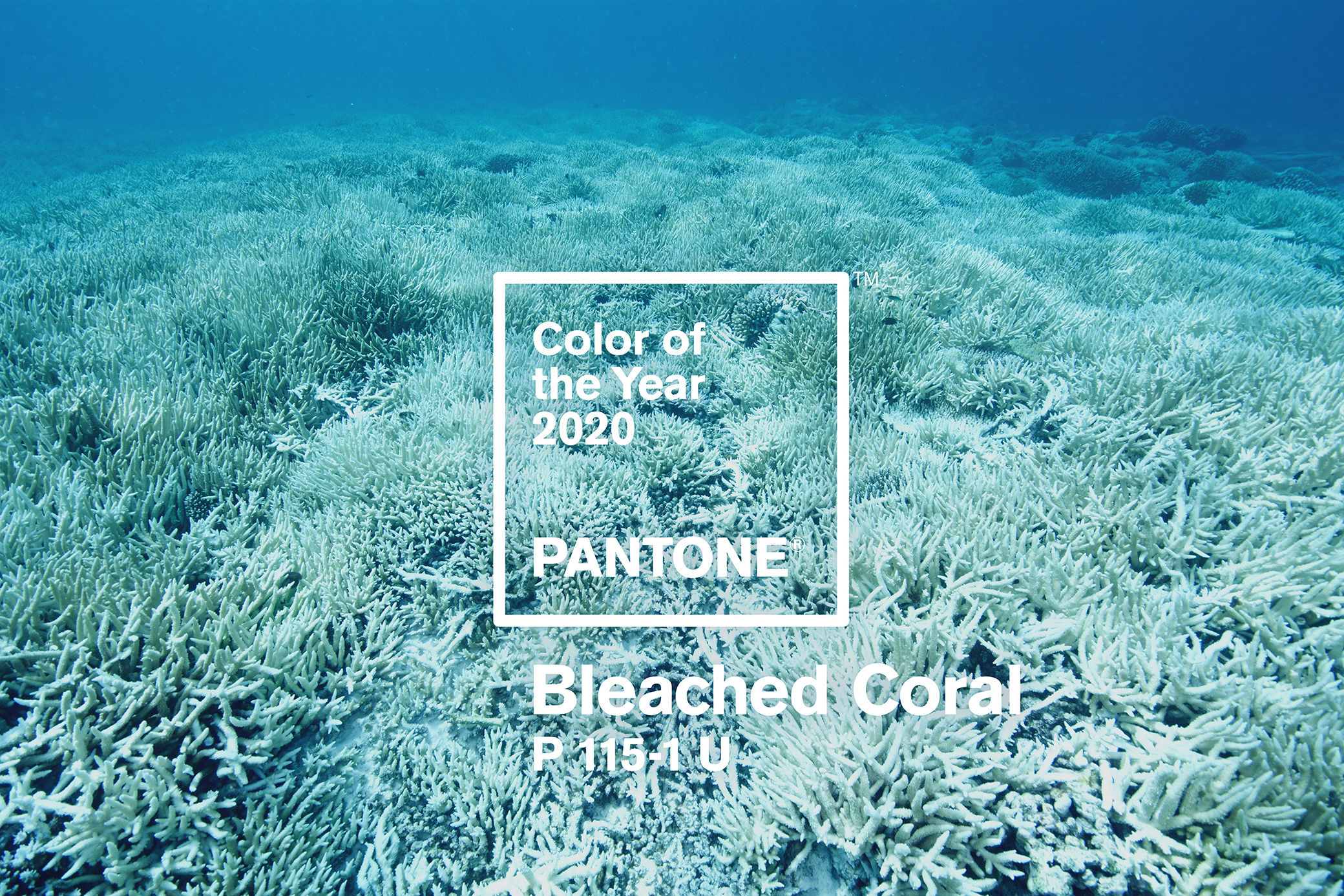 Pantone Colors 2020.Pantone Color Of The Year 2020 Bleached Coral Making A