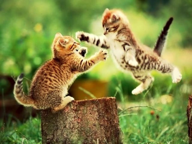 Cute Fight
