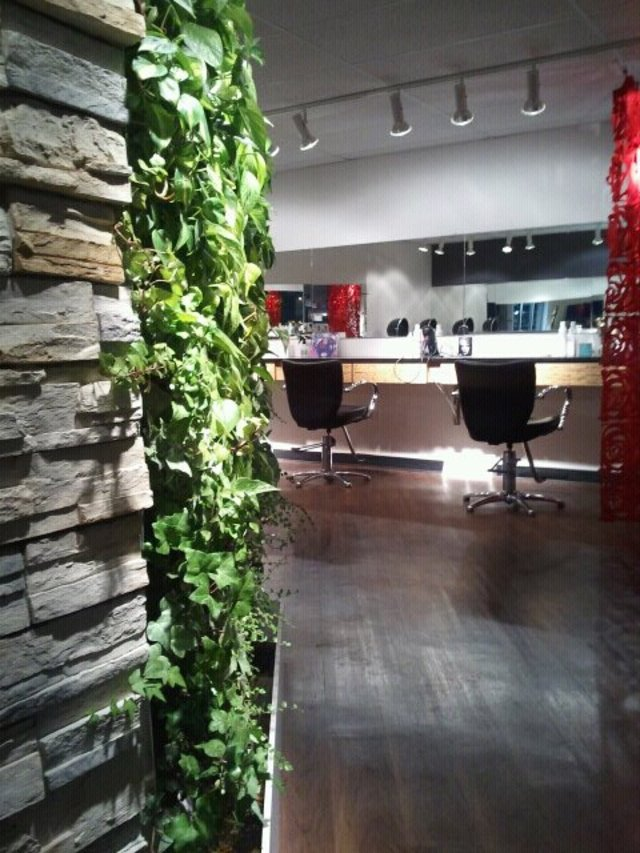 Farida Salon vertical plant wall!
