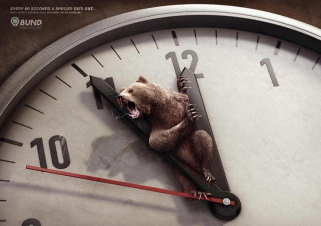 environnement-ours-cannes-lions-2011-gold