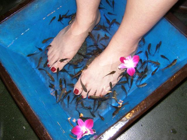 Fish-Pedicure2