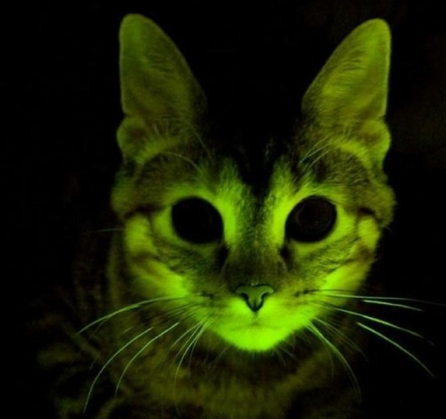 GlowInTheDark Cats Bangstyle 1