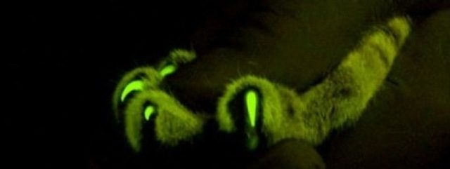 GlowInTheDark Cats Bangstyle 2