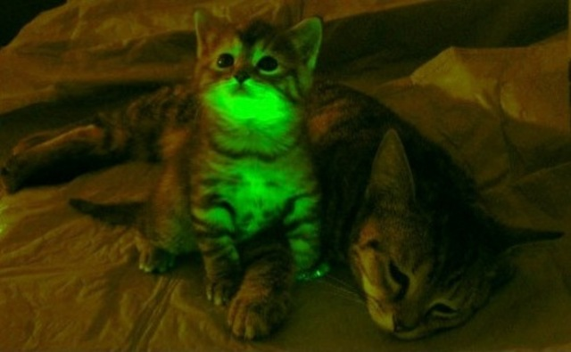 GlowInTheDark Cats Bangstyle 4