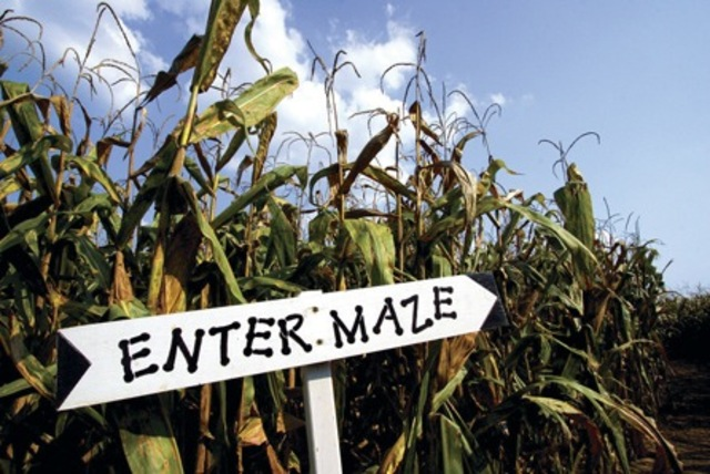 Lost Corn Conners Farms Maze Bangstyle