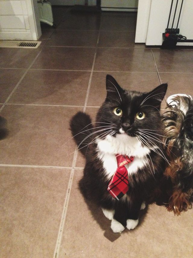 business meow