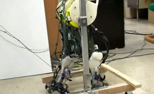 Robotic-legs-that-walk-in-biologically-accurate-manner