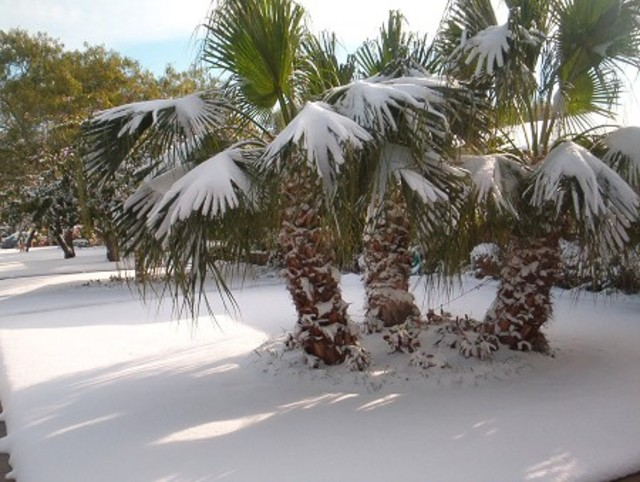 snow-in-florida